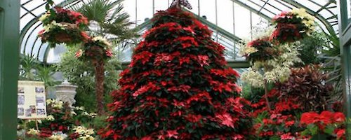 Niagara Parks Floral Showhouse is Ablaze with Christmas Colour