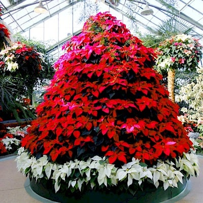 Christmas Tree Store Erie Pa: Floral Showhouse - Things To Do