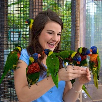 Discount coupons for bird kingdom in niagara falls