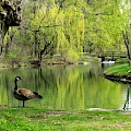 Dufferin Islands Profile Image