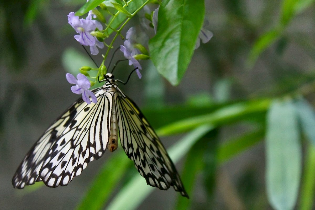 Butterfly Conservatory Things To Do Niagara Falls Canada Tiket Park Insect Kingdom
