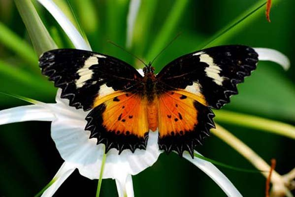 butterfly conservatory things to do niagara falls canada. Black Bedroom Furniture Sets. Home Design Ideas