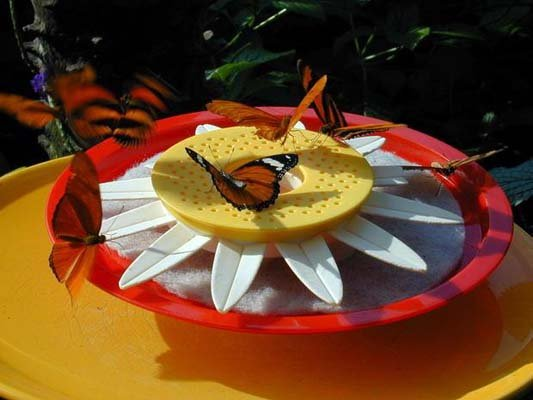Niagara falls butterfly conservatory discount coupons